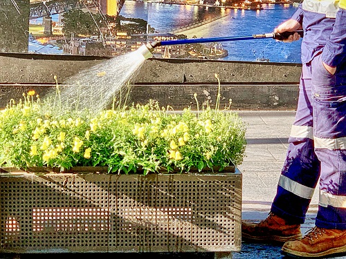 services d'un fleuriste à Gerzat